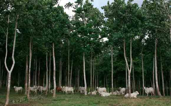 Faber-Castell colora di verde le foreste della Colombia