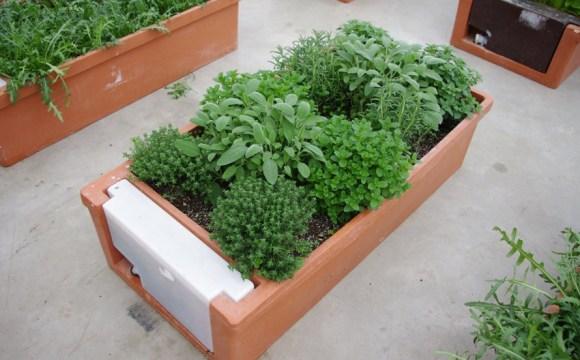 Orto urbano: Hobby Orto per coltivare sul balcone