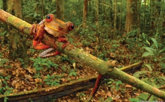 SC Johnson: crowdfunding per salvare 10.000 acri di Foresta Amazzonica