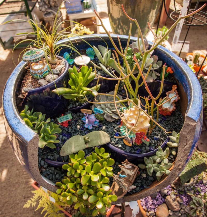 Large Of Pics Of Fairy Gardens