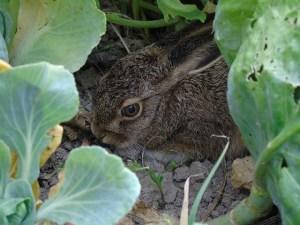 Animal Spirit Guides: Rabbit