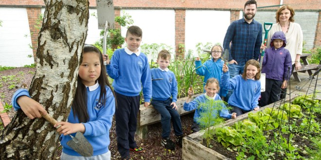 'Bug hotel' extension at Ennis school