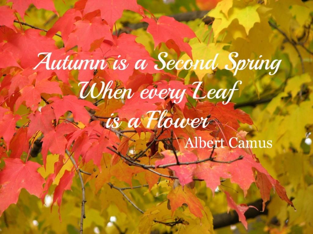 Fall Harvest Desktop Wallpaper Autumn Quotes Quotesgram