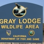 Gray Lodge Wildlife Area