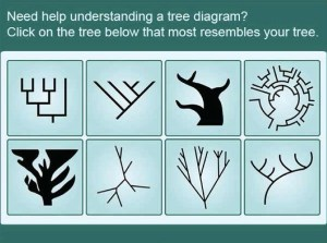 """The Field Guide to Trees home screen shows eight categories of evolutionary tree graphics, The """"blobby"""" (lower left) and """"tree-like"""" (left of the circular tree) designs are considered problematic particularly because of the difficulty in identifying branching points."""