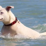 Best Dog Life Jackets – Why You Should Invest in one