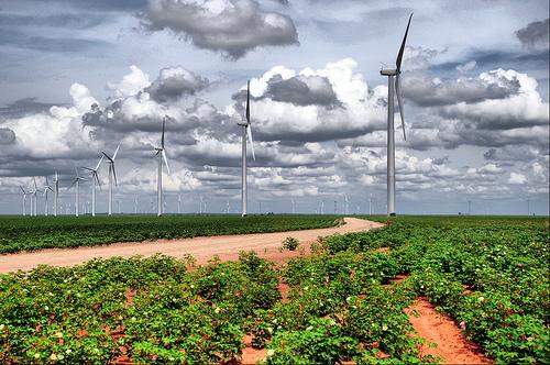 Wind on Farm