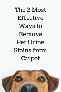 3 Best Ways To Remove Pet Urine Stains From Carpet Clean