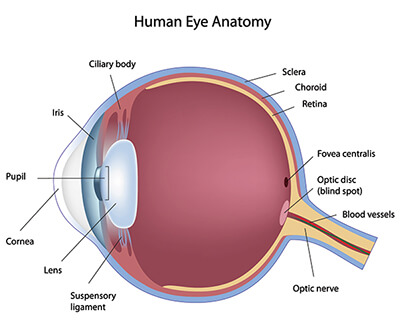 About Your Eyes Portsmouth Eye Surgery New Hampshire
