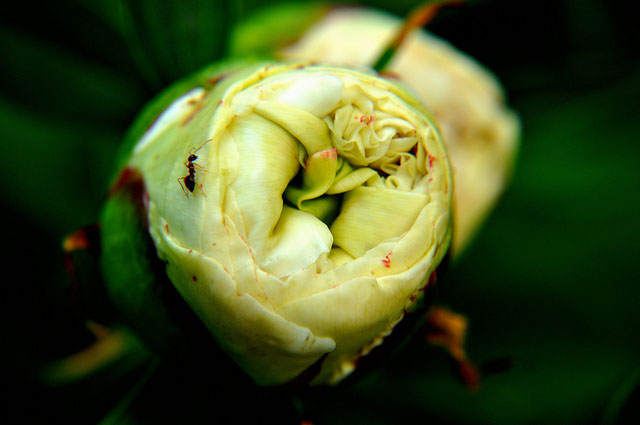 Three Poems by Randi Ward