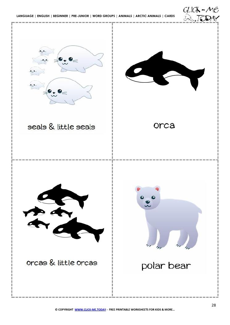 Free Printable Arctic Animals Classroom Cards Seal, Orca  Bear