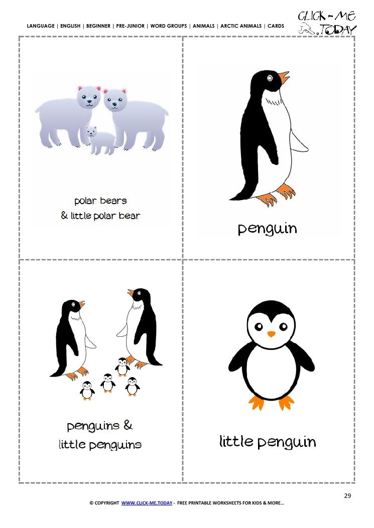 Free Printable Arctic Animals Flashcards Polar Bear, Penguin
