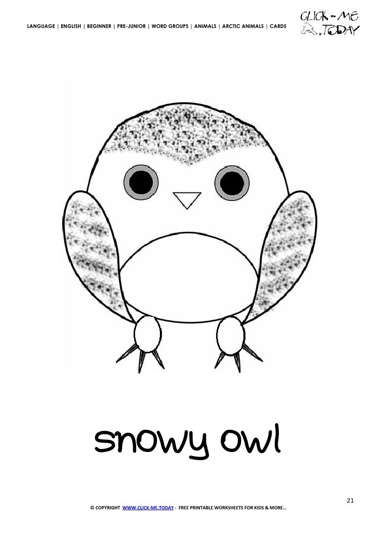 Printable Arctic Animal Snowy Owl wall card - Snowy Owl flashcard