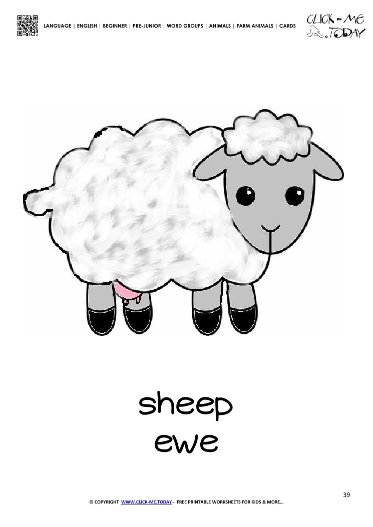 Farm animal flashcard Sheep Ewe - Printable card of Sheep