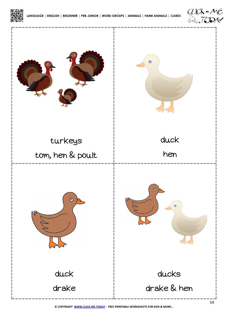 Farm animals flashcards 3 - Turkeys  Ducks