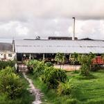 Monymusk Sugar factory