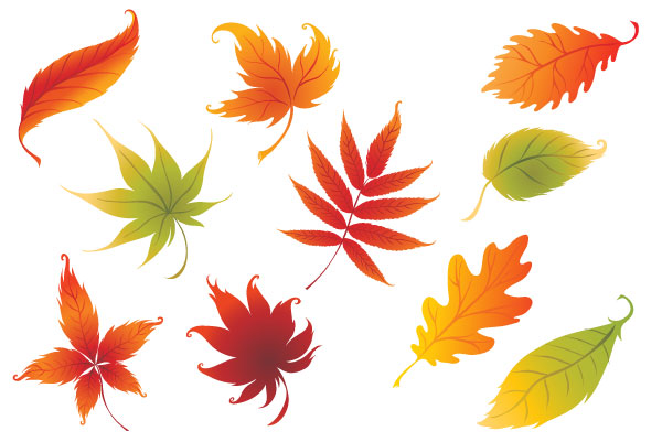 Tree With Leaves Falling Wallpaper Nine Colorful Leaves Vector Free Free Vector Graphics