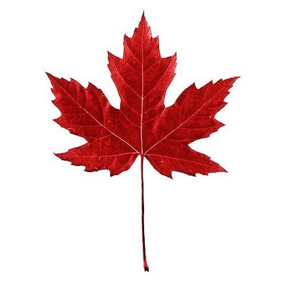 Fall In Love Leaf Wallpaper Red Maple Leaf Wallpaper Size After The Rain Clipart