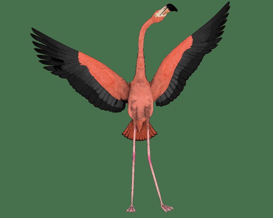 Pink Feathers Falling Wallpaper Flamingo Clip Art Clipart Best