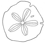 Sand Dollar Coloring Pages For Kids