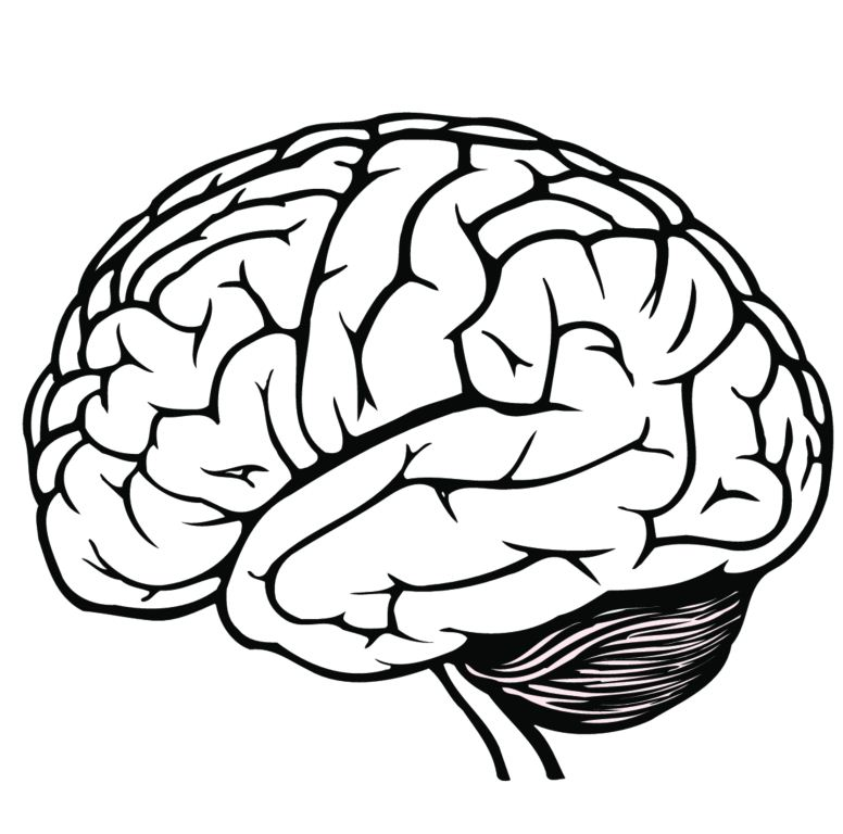 simple diagram of the brain clipart best