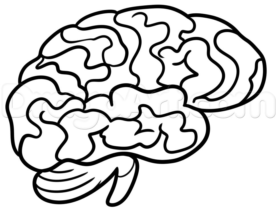 simple brain diagram clipart best