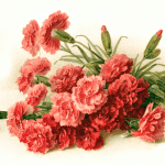 Victorian Carnation Clipart