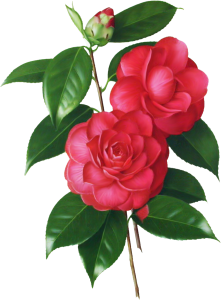 Victorian Roses Clipart