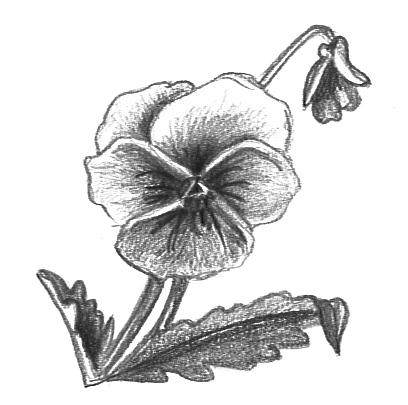 Flower Clip Art - Beautiful, Useful Flower Graphics