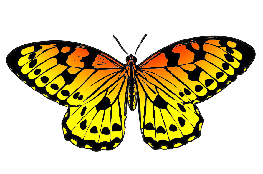 Colorful Animal Print Wallpaper Butterfly Clipart