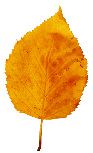 Fall Foliage Wallpaper For Iphone Yellow Autumn Leaf