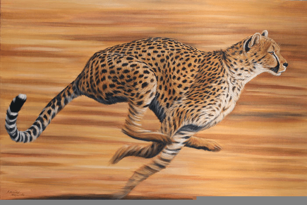 Cute Cartoon Hd Wallpapers Free Download African Cheetah Running Free Images At Clker Com
