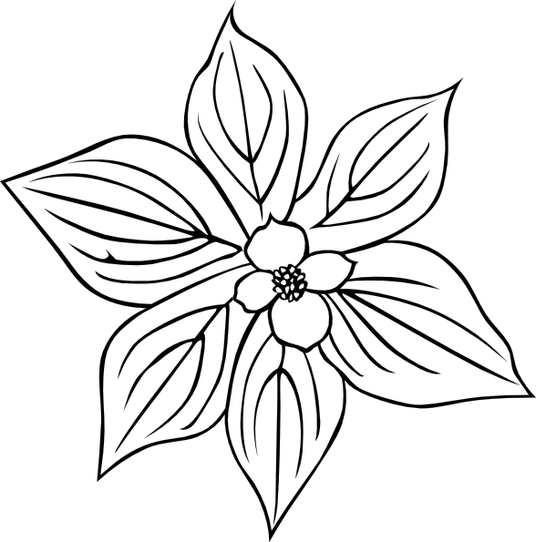 6 flower petals