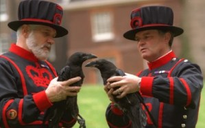 Tower of London Yeoman holding Ravens