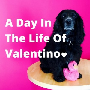 A day in the life of Valentino