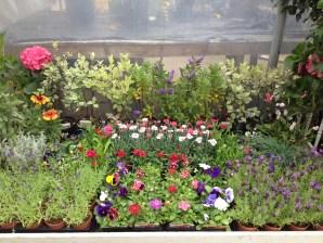 clonakilty-garden-flowers
