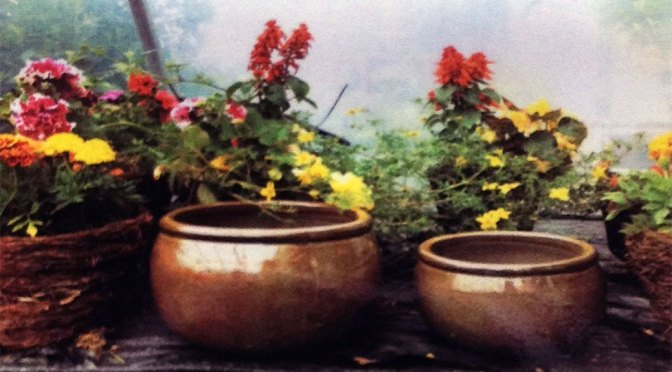 Brown pots – special offer