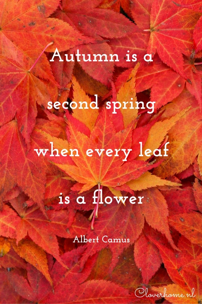 Maple Leaf Wallpaper For Fall Season A Quote To Start The Week Autumn Is A Second Spring
