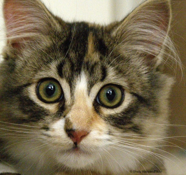 23. Cute Cat (Shelly Hansen:Flickr)
