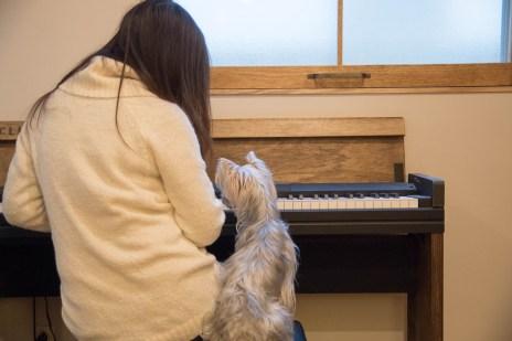 電子ピアノ ピアノ 造作 コルグ電子ピアノ KORG 犬 ヨーキー ヨークシャーテリア インテリア リノベーション