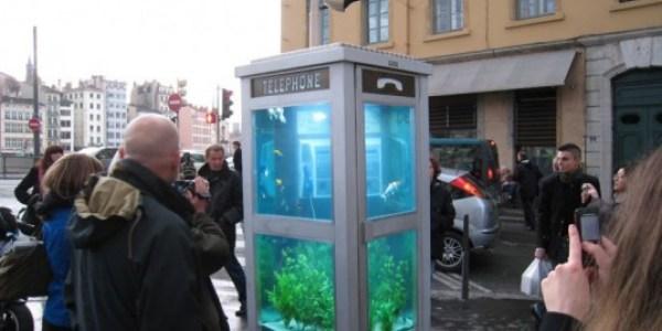 cabine téléphonique en aquarium_benedetto_bufalino_benoit_deseille
