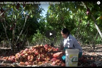 Cocoa farming in Peru Lasting Solutions to Injustice