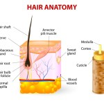 Why Your Scalp Gets Flaky