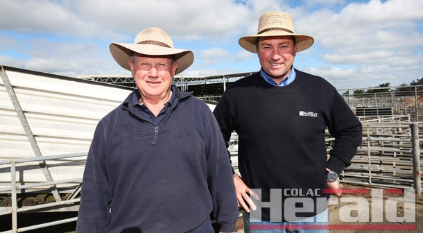 Sheep sales at Colac could benefit farmers