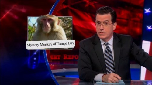 Stephen Colbert reports on the Monkey on the Lam