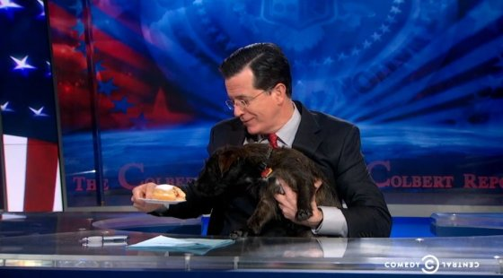 Stephen Colbert with a Dog