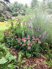 New Plants In My Garden: Garden Bloggers Bloom Day August ...
