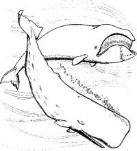 Coloriage Baleine A Imprimer Gratuit.247 Dessins De Coloriage Baleine Imprimer Sur Laguerche