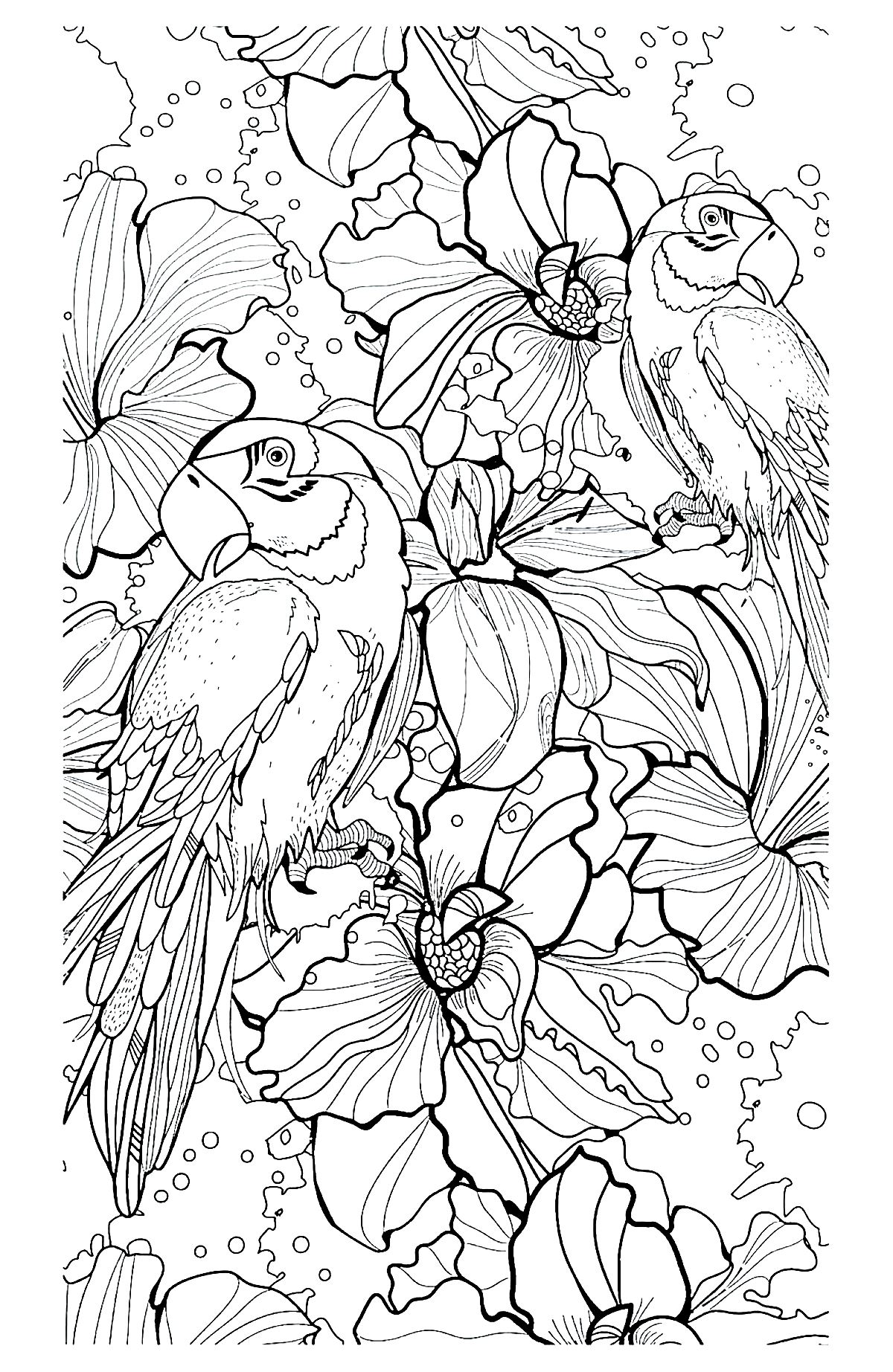 Printable coloring pages rainforest animals - Printable Coloring Pages Rainforest Animals 25