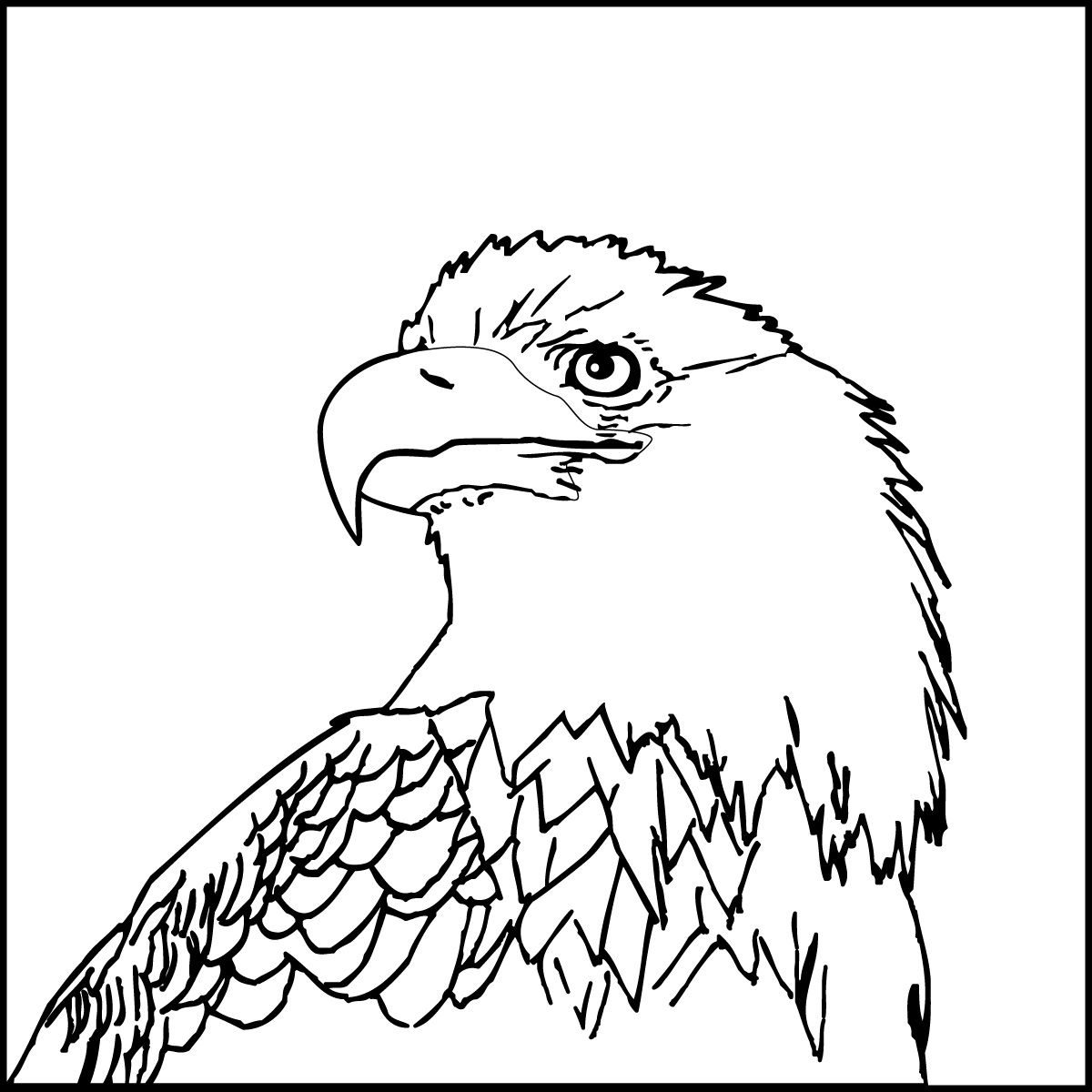 Coloring pages eagle - Bald Eagle Head Coloring Page Quality 80 Strip All Free Coloring Pages American Bald